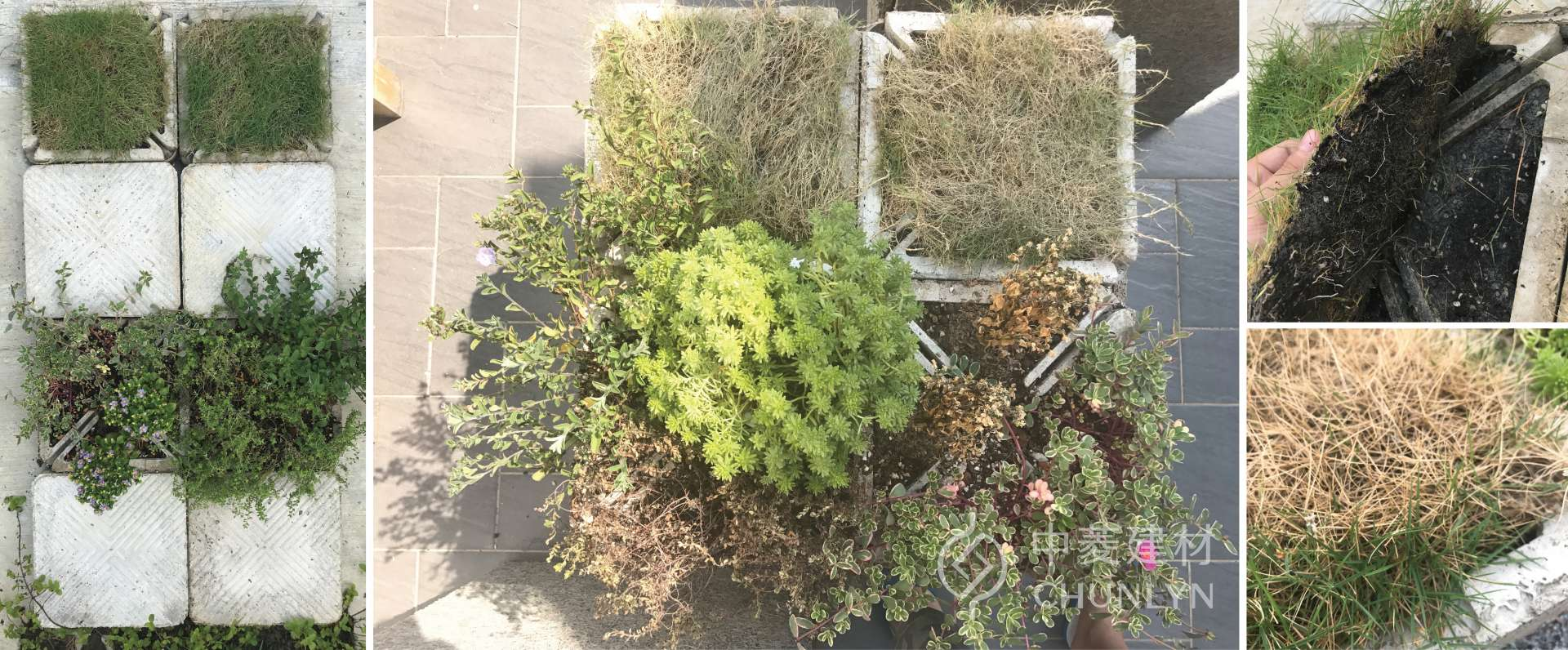 Cooler屋頂植草隔熱兩用磚為植物纖維所製,保水性比塑膠盆好,而且能讓植物生長更順利