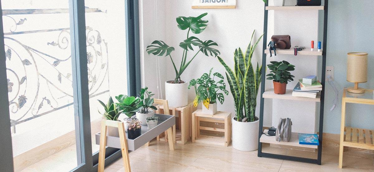 了解甲醛是什麼味道後,可在室內種植植物淨化空氣、除甲醛,減少甲醛濃度。