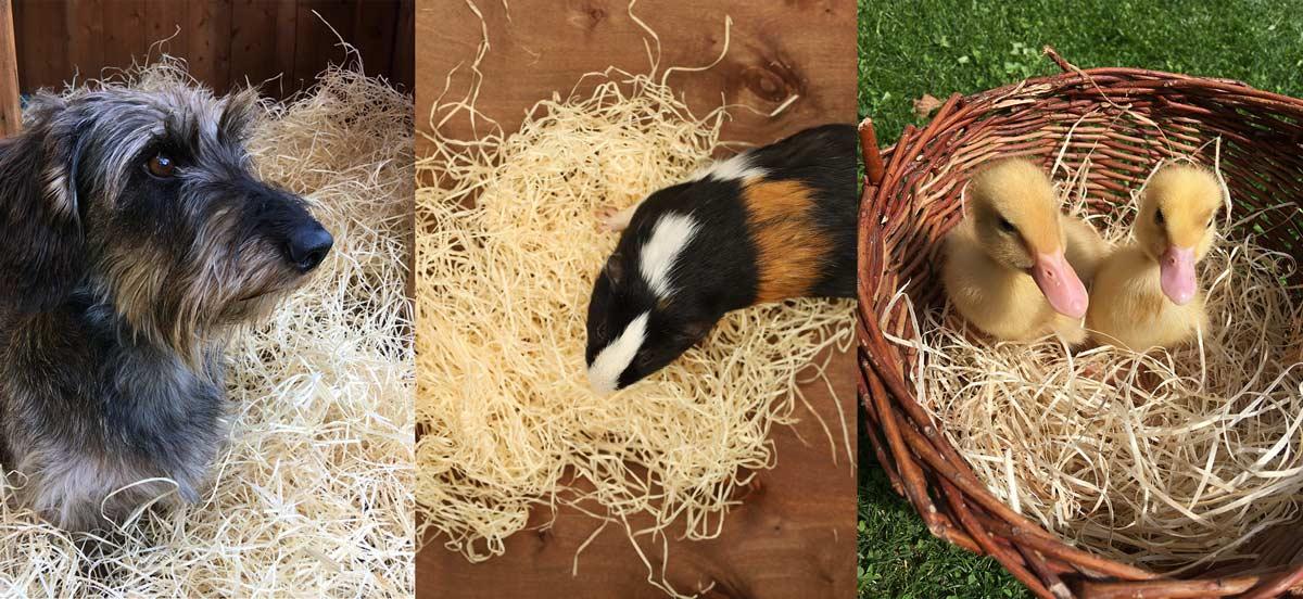 歐洲工廠將木絲應用在動物鋪墊、寵物窩,舒適又有保溫效果。(圖片來源/Wood Wool Kalafut官網)
